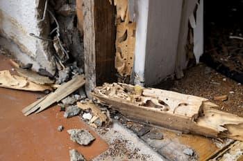 termite-vice-cache